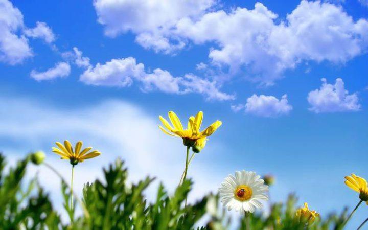 الطقس: ارتفاع على درجات الحرارة اليوم وأجواء خماسينية غدا