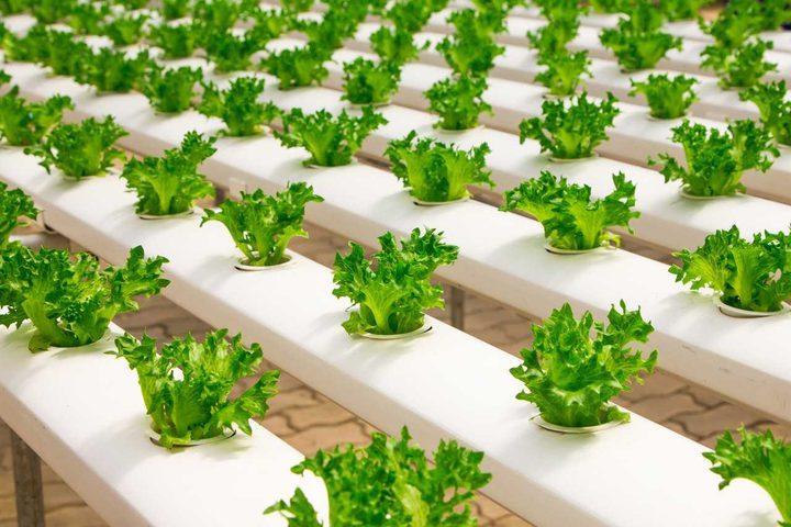 انطلاق الحملة الوطنية لزراعة الحدائق المنزلية بالخضار بطولكرم