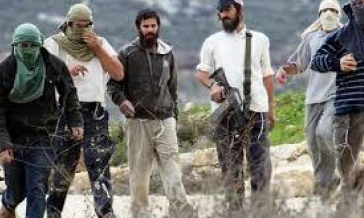 مستوطنون يمنعون المزارعين من الوصول لأراضيهم شرق بيت لحم