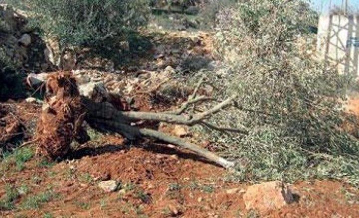 الاحتلال يسلم إخطارات بوقف البناء واقتلاع أشجار في الأغوار
