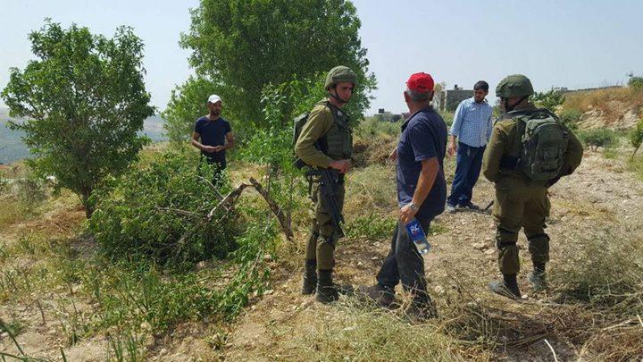 مستوطنون يقتلعون 350 شتلة زيتون جنوب بيت لحم
