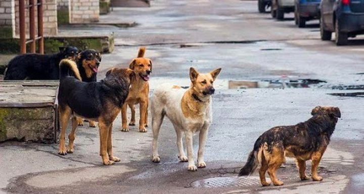 دراسة: الكلاب الضالة هي التي نقلت كورونا من الخفافيش للإنسان