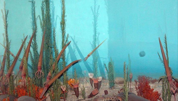 نقص الأكسجين في مياه المحيطات ينذر بانقراض جماعي جديد