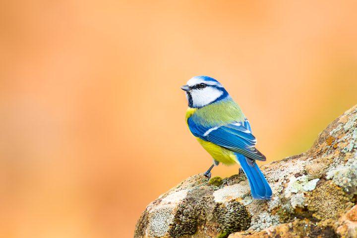مرض غامض يفتك بالآلاف من طيور الحداد الأزرق في ألمانيا