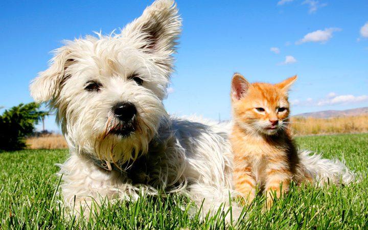 محتالون يستغلون أزمة كورونا لخداع محبي الحيوانات