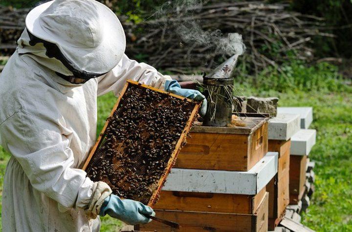قرار بمنع استيراد أو ادخال عسل النحل الى غزة