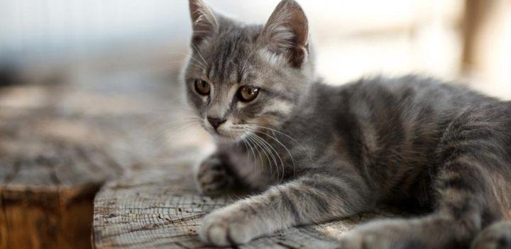 إسبانيا.. وفاة أول قط بفيروس كورونا المستجد