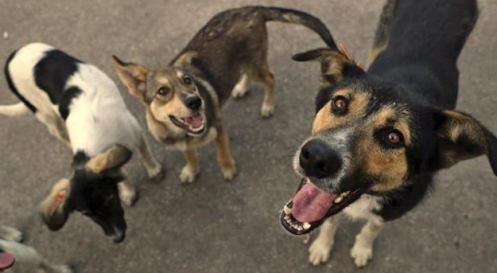 مجموعة كلاب ضالة تنهي حياة طبيبة أمريكية