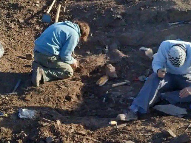 العثور على بقايا آخر ديناصور مفترس على الأرض