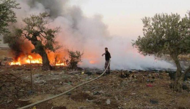 حرائق تلتهم 180 شجرة زيتون ولوز ومحاصيل قمح في جنين