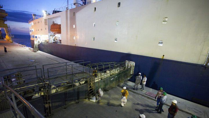 بسبب كورونا.. احتجاز سفينة كويتية لنقل الماشية قبالة أستراليا