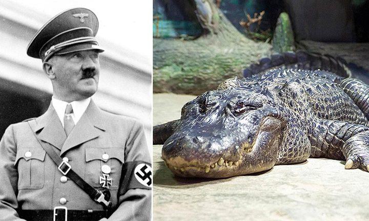 نفوق تمساح هتلر الاسطوري عن عمر 84 عاما
