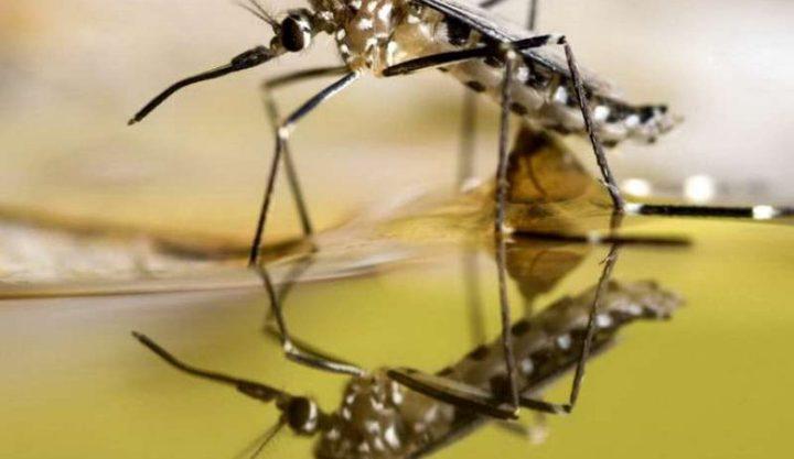 دراسة: كورونا يزيد فرص تكاثر الحشرات الضارة