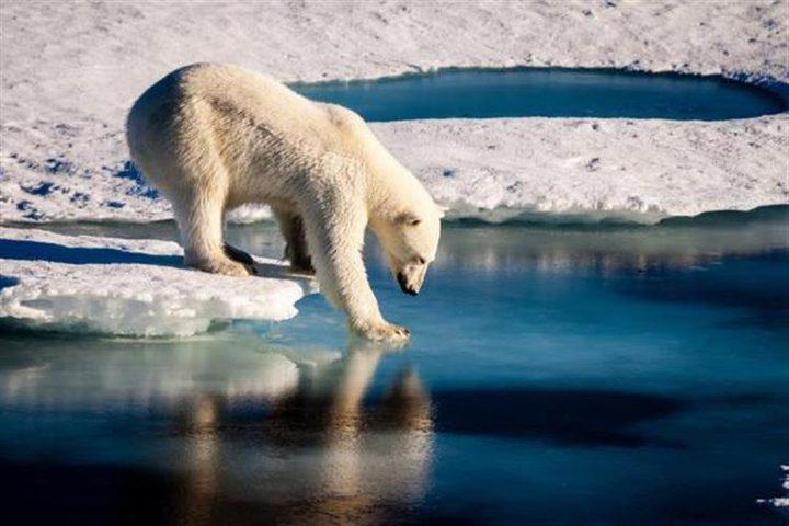 """اكتشاف وجود """"حرائق كامنة"""" تحت الجليد في القطب الشمالي"""
