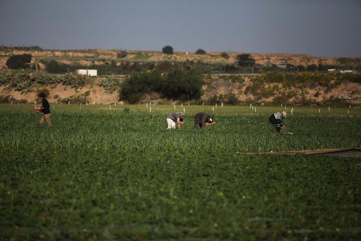 """وزير الحكم المحلي: ليس من صلاحيات """"حماس"""" خصخصة أراضي حكومية"""