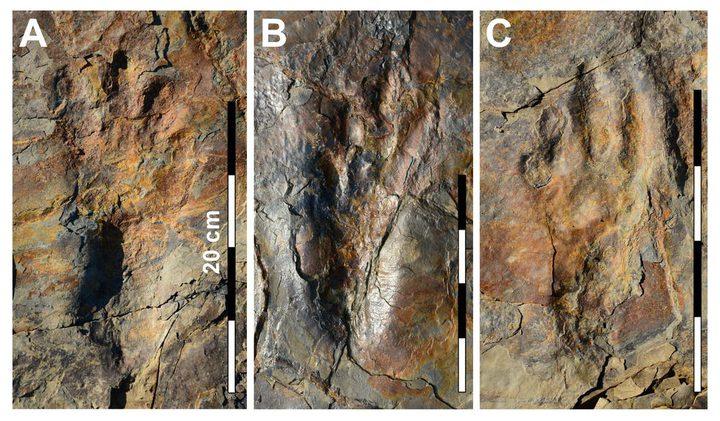 العثور على أحافير تكشف طريقة تحرك التماسيح قبل ملايين السنين