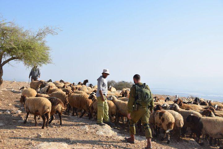 الاحتلال يحتجز عددا من الرعاة في الأغوار الشمالية