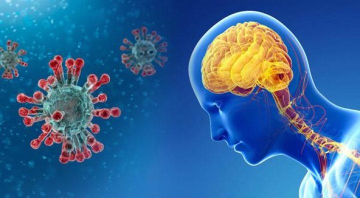 دراسة: فيروس كورونا قد يصيب الدماغ ويتكاثر داخله