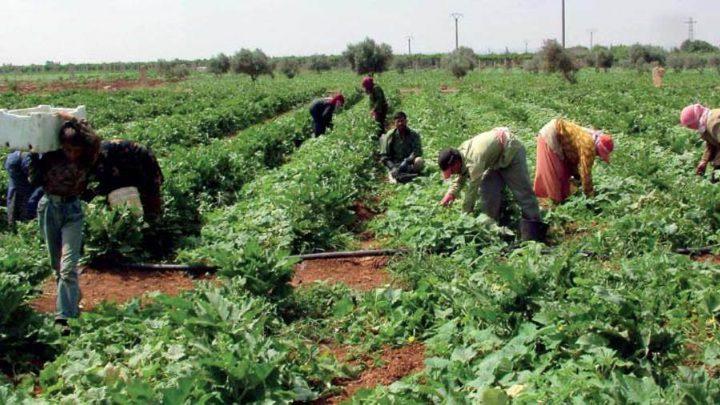 الزراعة تؤكد استمرارها في زيادة مساحة الأراضي المزروعة وحمايتها