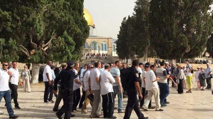 """215 مستوطنا يقتحمون """"الاقصى"""" بحماية شرطة الاحتلال"""