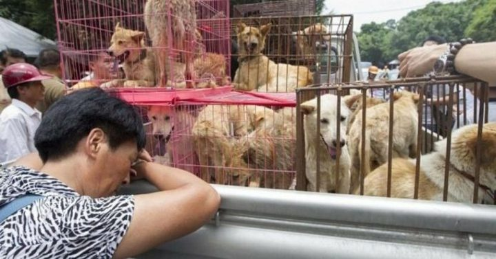 بالرغم من كورونا.. إحياء مهرجان لحوم الكلاب في الصين !
