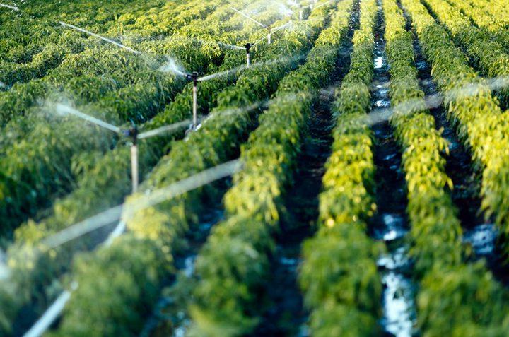 تحذير.. محاصيل النباتات تحتوي على جزيئاتالبلاستيك