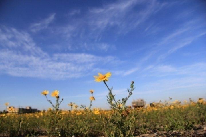 طقس  فلسطين: أجواء حارة و انخفاض طفيف على درجات الحرارة