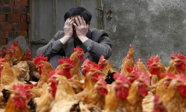 الصين تحرم ذبح الدواجن أو بيعها حية في الأسواق