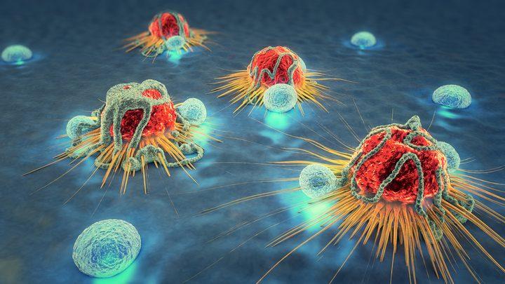 دراسة: فئران الخلد يمكن أن تساعد في القضاء على السرطان