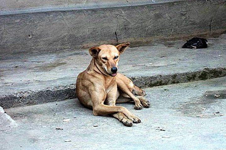 للمرة الأولى..ولاية هندية تجرم بيع لحوم الكلاب