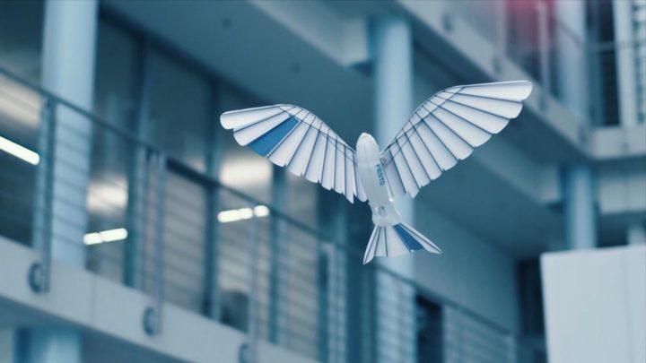ألمانيا.. ابتكار طيور روبورتية تحاكي الحقيقة
