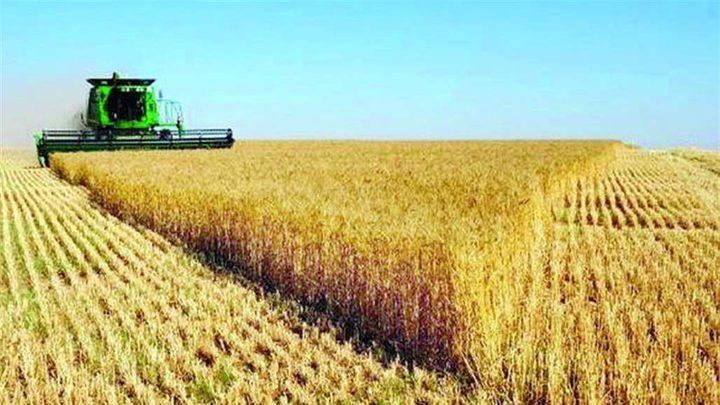 دراسة: تغطية التربة بالأغشية البلاستيكية يزيد من غلة المحاصيل