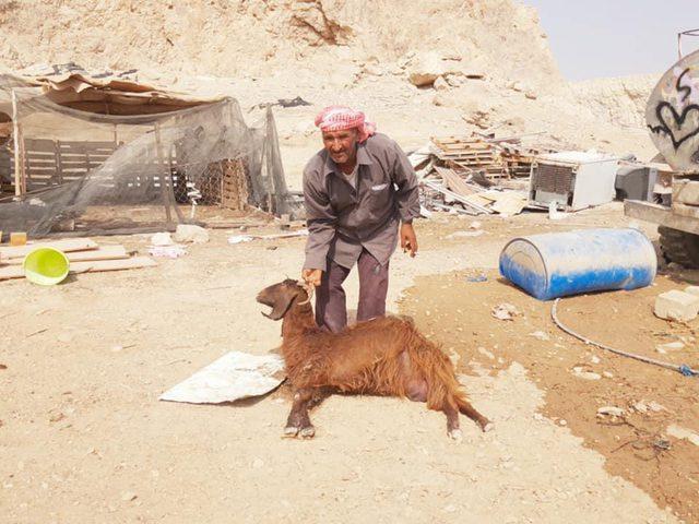 نفوق 54 رأساً من الماشية بالأغوار بسبب اعتداءات المستوطنين