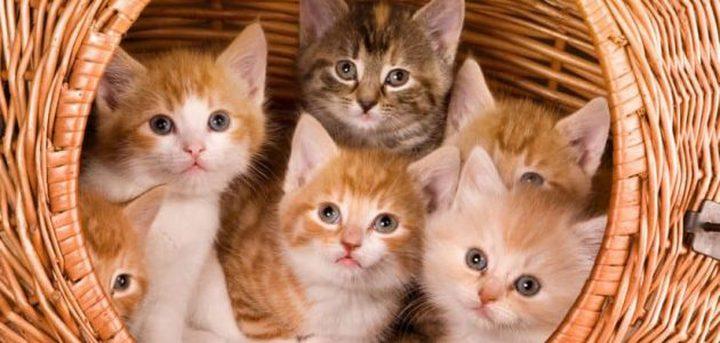 ما تفسير رؤية القط في المنام؟