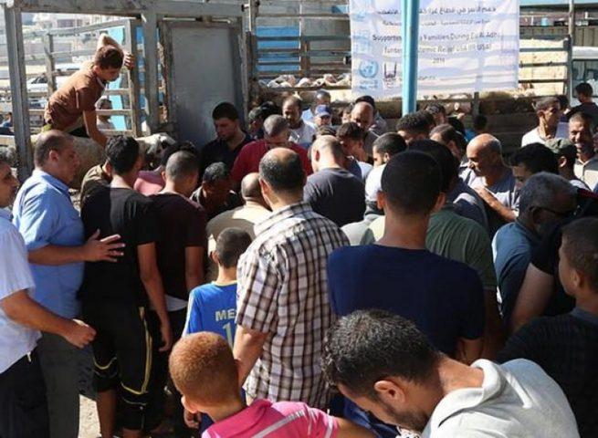 الأونروا تعلن عن توزيع لحوم الأضاحي للأسر اللاجئة الفلسطينية