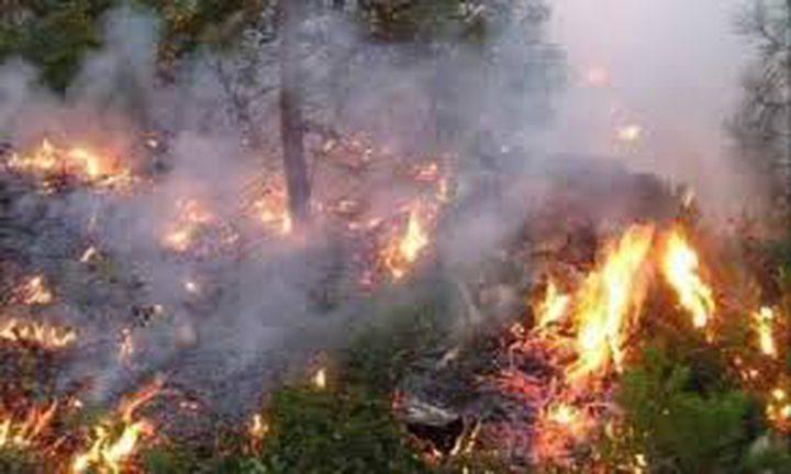الحرائق تلتهم غابات تونس