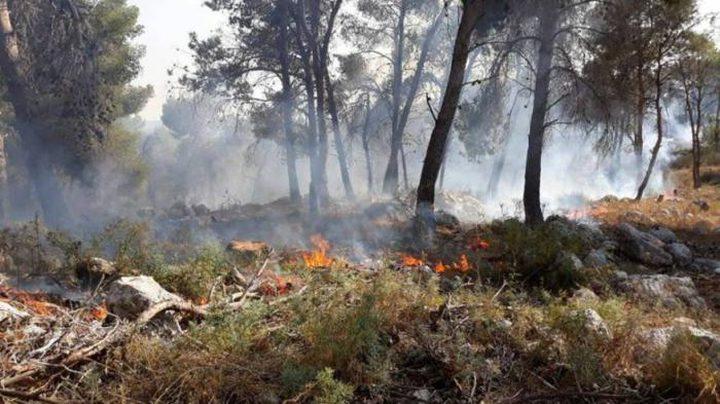 حريق كبير يلتهم 500 شجرة جنوب جنين