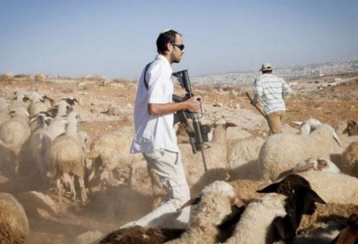 مستوطنون يعتدون على رعاة الماشية جنوب الخليل