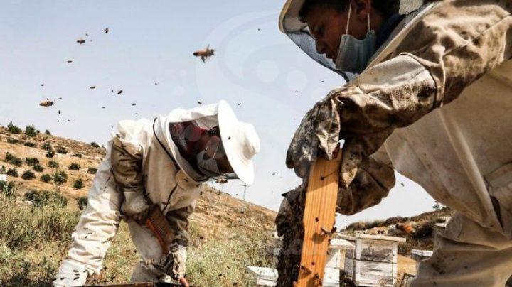 العسل أفضل من المضادات الحيوية