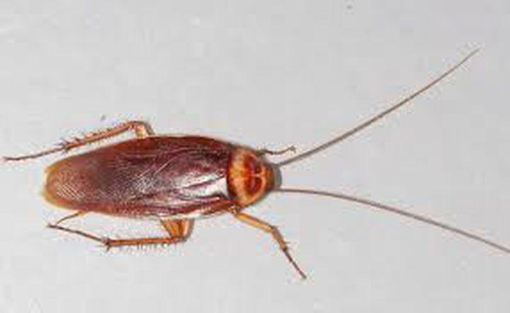 ما تفسير رؤية الحشرات والصراصير في المنام؟