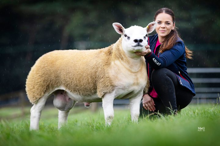 اسكتلندا.. بيع أغلى خروف بالعالم بسعر خيالي