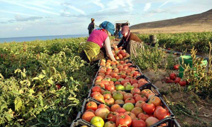 ارتفاع حجم الصادرات الزراعية في مصر