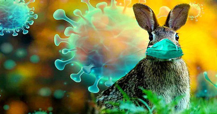 """أكسفورد: الحيوانات مصدر """"الأوبئة المرعبة"""" التي ستظهر بالمستقبل"""