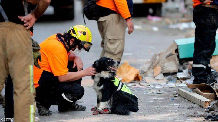 كلب يسجل نجاحا باهرا بالعثور على مفقودين في انفجار بيروت