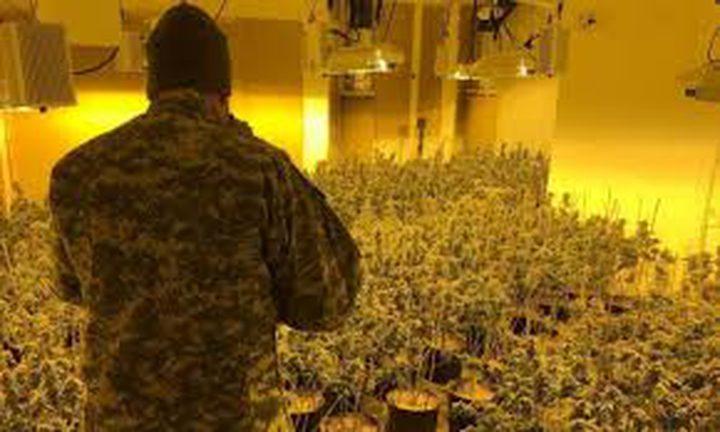الأمن الوقائي:ضبط 393 شتلة مخدرات جنوب الخليل