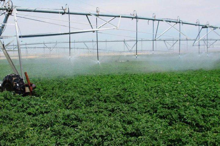 العابدي توجه نصائح للمزارعين لتفادي الخسائر في ظل ارتفاع الحرارة