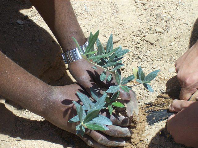 قوات الاحتلال تمنع متظاهرين فلسطينيين من زراعة أشجار الزيتون