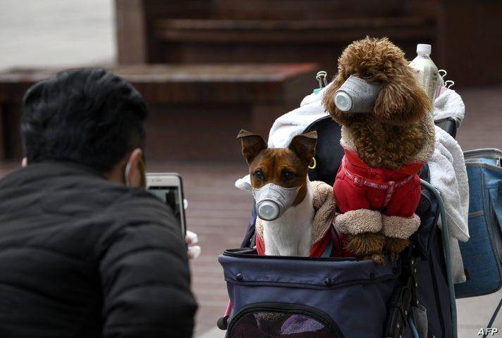 دراسة: فيروس كورونا ينتقل من البشر إلى الكلاب والقطط