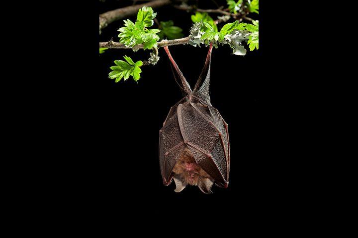 أبرز 8 معلومات مثيرة عن الخفافيش