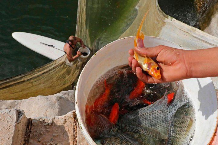 الشاب الفلسطيني مراد ابو عرام، يعمل في مشروعه لتربية الاسماك في بلدة يطا جنوب الخليل المصدر( أ ف ب)